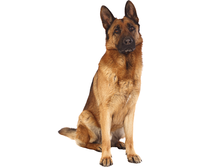 Houses For German Shepherds 28 Images The World S