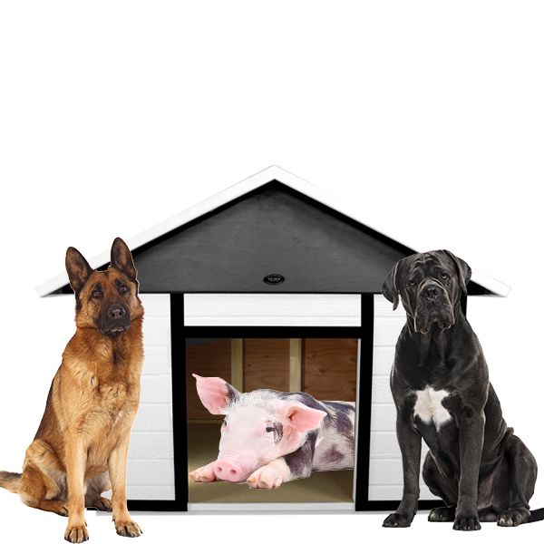XXL Big Dog House